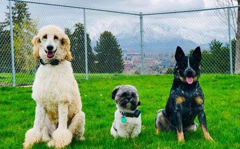 Syracuse Dog Training